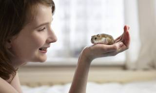 How to Train Your Hamster to Be Tame