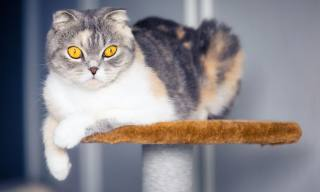 9 Amazing Cat Trees You must see