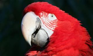 Was ist Parrot Eye Pinning?