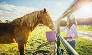 How to feed Beet Pulp to a Horse