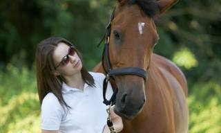Cleveland Bay Horse Breed Profil