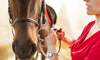 How to Clean Your Horse's Bit