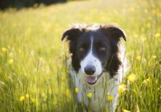 Top 10 Smartest Dog Breeds