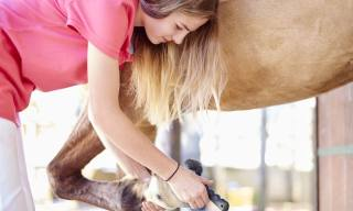 Basic, Daily and Annual Horse and Pony Care Checkliste